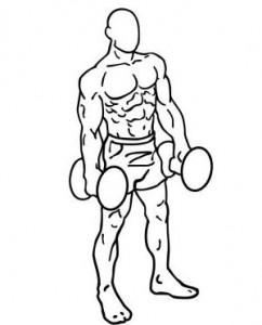 bicepsovy-zdvih-s-jednoruckami